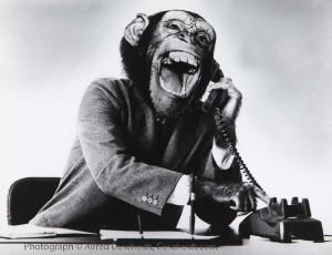 Alfred-Gescheidt-chimp-on-phone_6270_rev